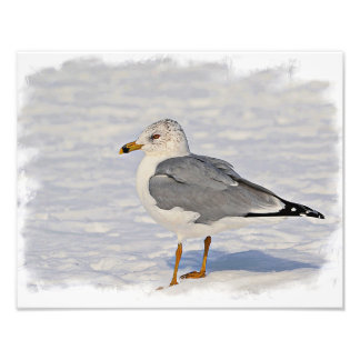 Gull in the snow photographic print
