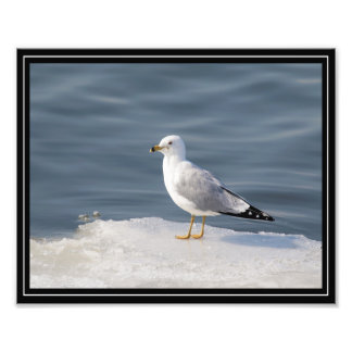Gull on ice photographic print