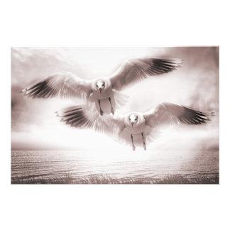 Gull Photo Print