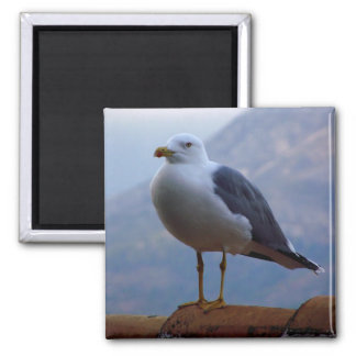 Gull put in wall square magnet