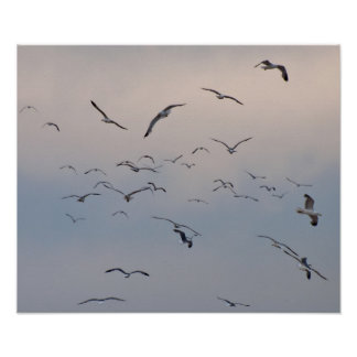 Gull Squall Poster