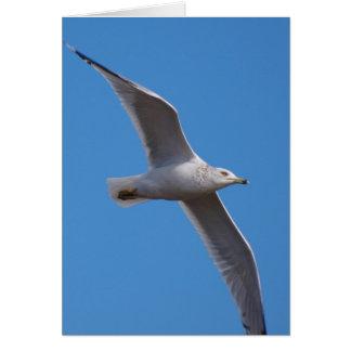 Gull Zoom 15 Greeting Card