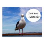 gullible seagull post card