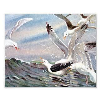 Gulls In Ocean Photo Art