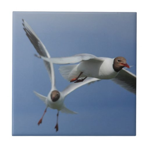 gulls in the sky small square tile