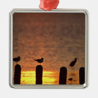 Gulls on pilings in Laguna Madre, South Padre Silver-Colored Square Decoration