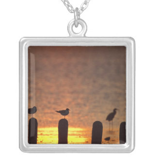 Gulls on pilings in Laguna Madre, South Padre Silver Plated Necklace