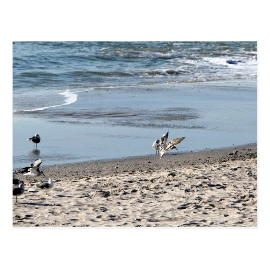 Gulls on the Beach Postcard
