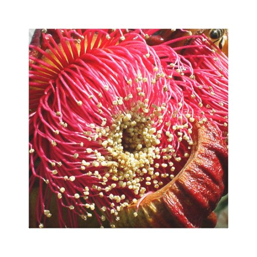 Gum Tree Flower Wrapped Canvas Stretched Canvas Print