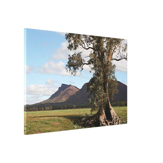 Gumtree & Wilpena Pound, Flinders Ranges Canvas Print