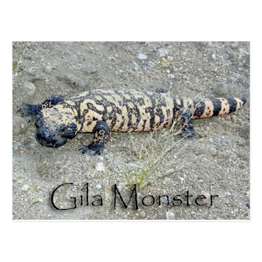 """Gunny"" the Gila Monster In Congress, Arizona 6/26 Postcard"