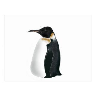 Gunter the Penguin Postcard