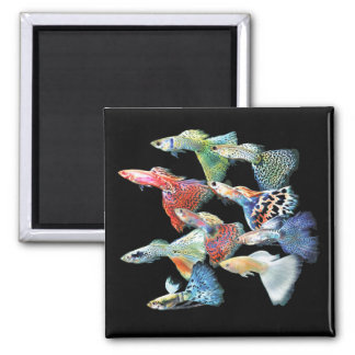 Guppies Square Magnet