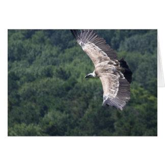 Gyps fulvus flying greeting card