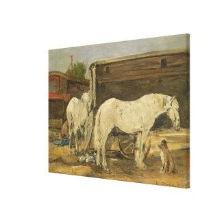 Gypsy Horses, c.1885-90 (oil on canvas) Canvas Print