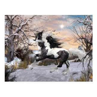 Gypsy Vanner Horse Post Card