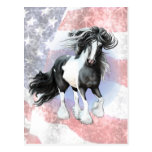 Gypsy Vanner Prince Postcard