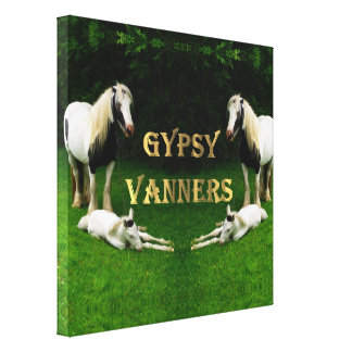 Gypsy Vanners Canvas Print