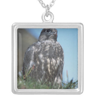 gyrfalcon, Falco rusticolus, juvenile getting 2 Silver Plated Necklace