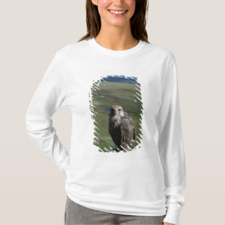 gyrfalcon, Falco rusticolus, juvenile getting T-Shirt