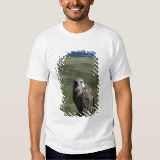 gyrfalcon, Falco rusticolus, juvenile getting T Shirt