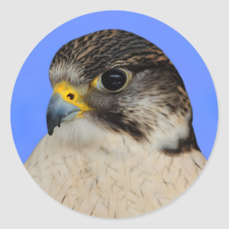 Gyrfalcon Saker Hybrid Falcon Round Sticker