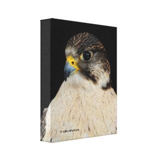 Gyrfalcon Saker Hybrid Falcon Stretched Canvas Prints