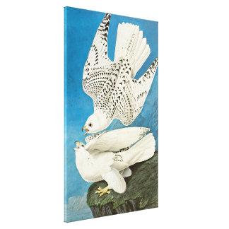Gyrfalcons (aka gerfalcon) by John James Audubon Gallery Wrap Canvas