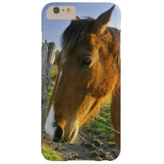Haast, New Zealand. A horse ranch in New 2 Barely There iPhone 6 Plus Case