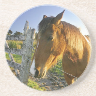 Haast, New Zealand. A horse ranch in New 2 Beverage Coasters