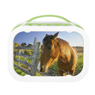 Haast, New Zealand. A horse ranch in New 2 Lunch Box