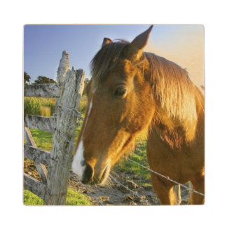 Haast, New Zealand. A horse ranch in New 2 Wood Coaster