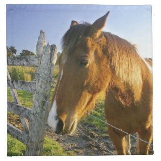 Haast, New Zealand. A horse ranch in New 2 Napkin