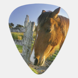 Haast, New Zealand. A horse ranch in New 2 Plectrum