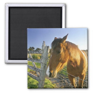 Haast, New Zealand. A horse ranch in New 2 Square Magnet