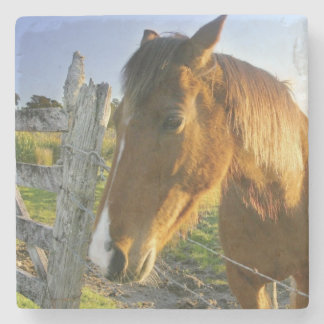 Haast, New Zealand. A horse ranch in New 2 Stone Beverage Coaster