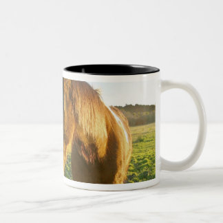 Haast, New Zealand. A horse ranch in New 2 Two-Tone Coffee Mug