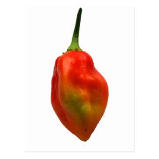 Habanero Single Pepper Photograph Postcard
