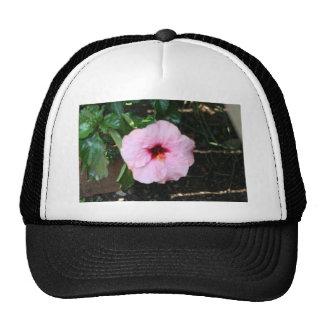 habicus mesh hats