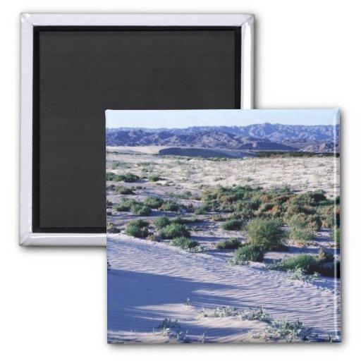 Habitat for Coachella Valley fringe-toed lizard Refrigerator Magnets