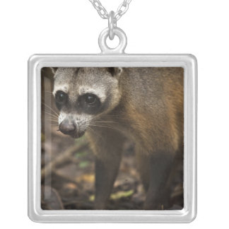 Habituated Crab-eating Raccoon Procyon Silver Plated Necklace