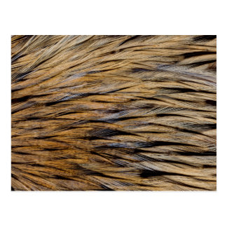Hackle Feather Abstract Postcard