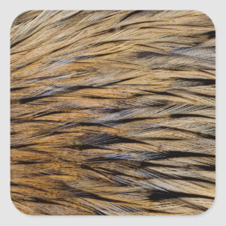 Hackle Feather Abstract Square Sticker