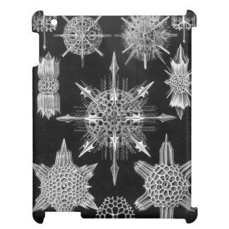 Haeckel Acanthophracta iPad Cover
