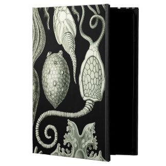 Haeckel Amphoridea iPad Air Covers