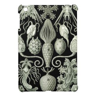 Haeckel Amphoridea iPad Mini Cover