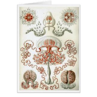 Haeckel_Anthomedusae Card