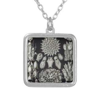 Haeckel Bryozoa Silver Plated Necklace