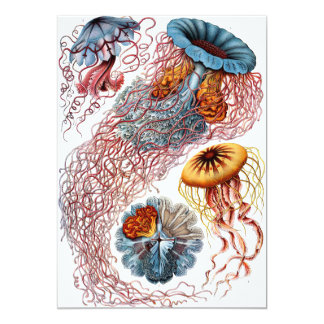 "Haeckel Discomedusae 5"" X 7"" Invitation Card"