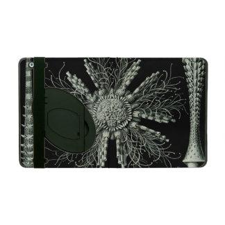 Haeckel Echinidea Covers For iPad